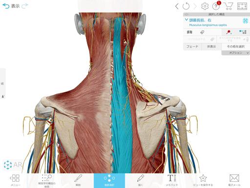 脊柱起立筋の写真