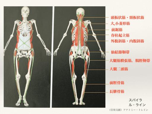 背中の筋膜