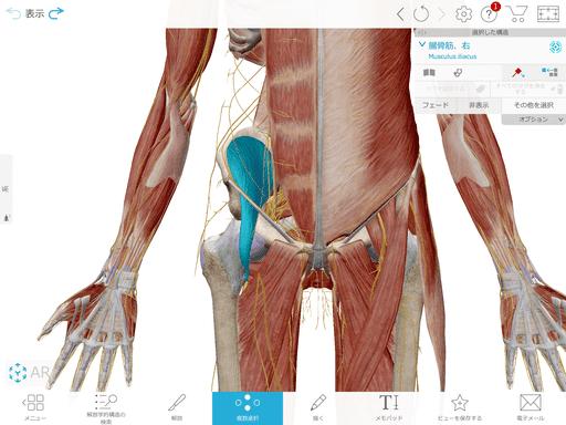 股関節にある筋